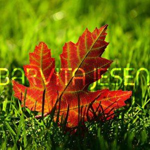 Barvita jesen – program dogajanja